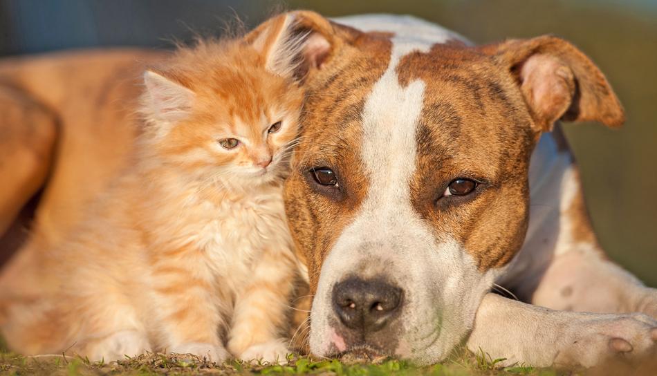 Alimentazione estiva per cani e gatti