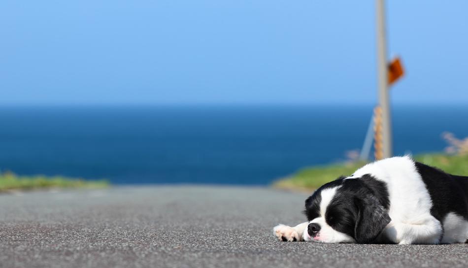 >Abbandonare un cane o un gatto è un Reato