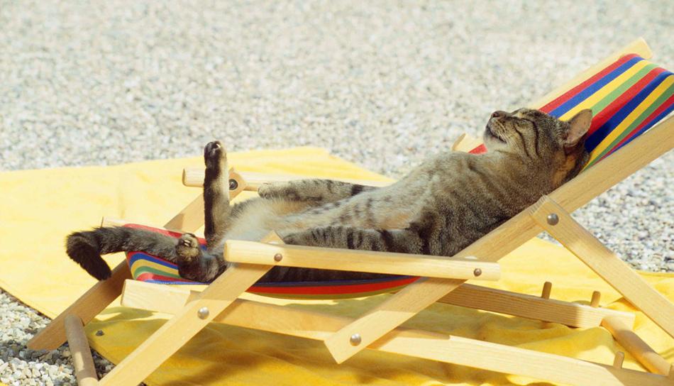 AColpo di calore per cani e gatti