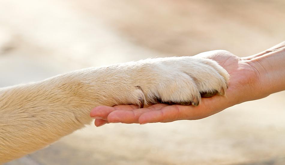 giornata-amanti-cani