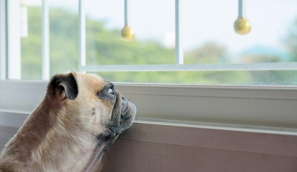 ansia-cani-copertina