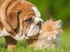 Adottare un cucciolo o gattino… come prepararsi al meglio!