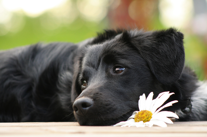 comportamenti-che-i-cani-odiano2