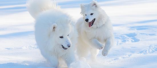 insidie della neve per i cani