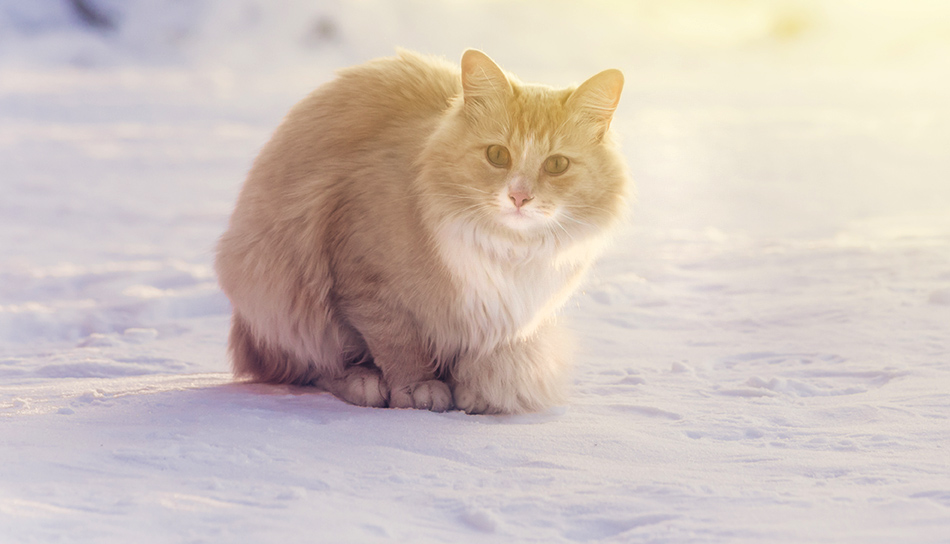 Inverno archivi amici cani e gatti blog for Il gatto inverno