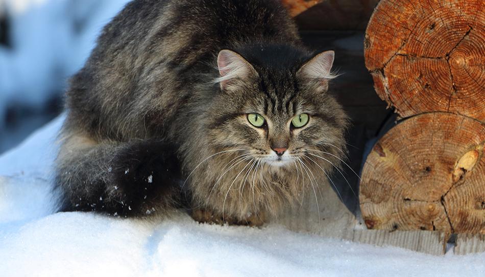 Gatti nascosti sotto le auto in inverno meglio fare for Il gatto inverno