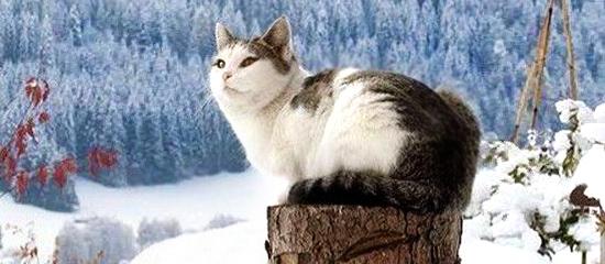 gatto-neve