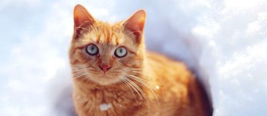 Alimentare il gatto in inverno come scegliere il cibo adatto for Il gatto inverno