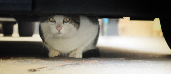 gatti nascosti sotto le auto