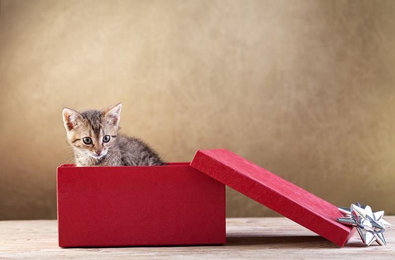 regalare un cucciolo o un gattino per Natale