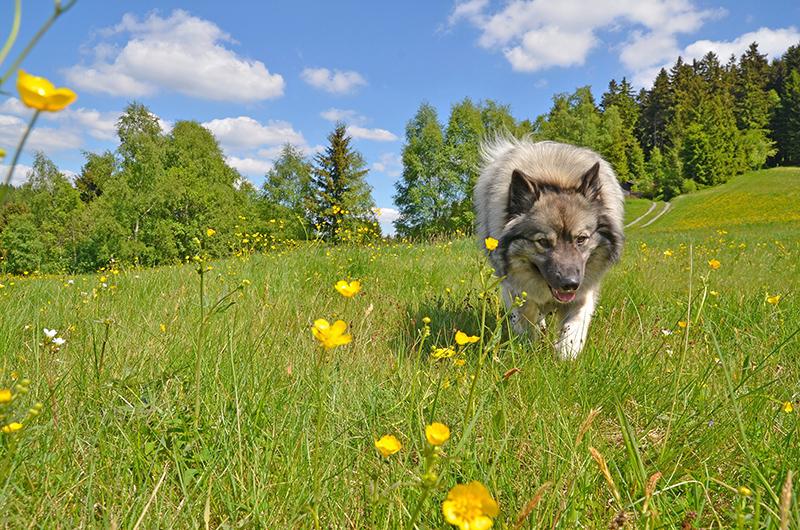 Cane-primavera-processionaria