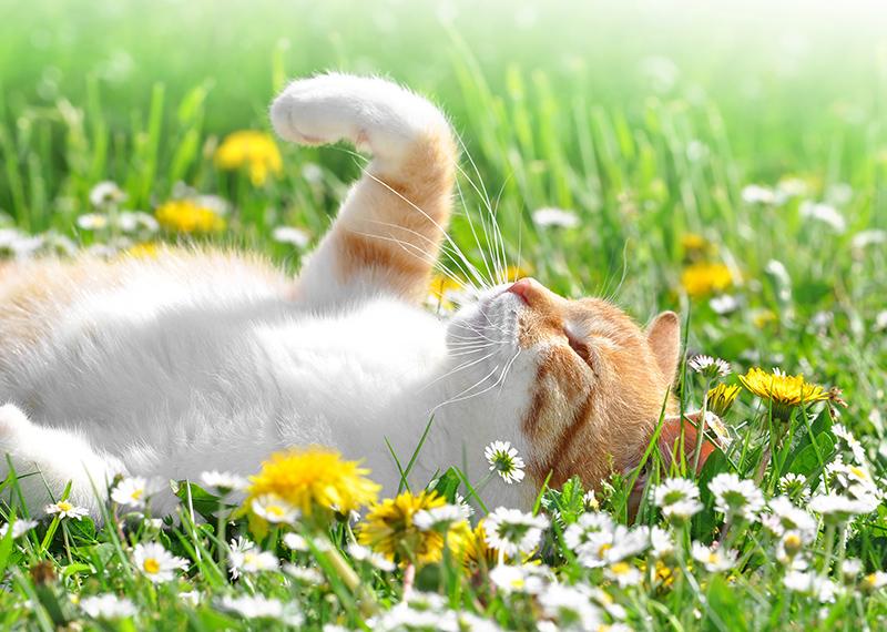 trainer-gatto-primavera-fiori