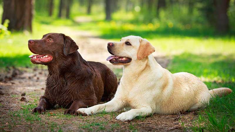 cani e gatti in calore