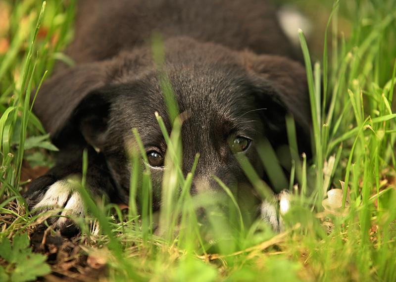 Quali sono le piante pericolose per cani e gatti for Piante velenose per i cani