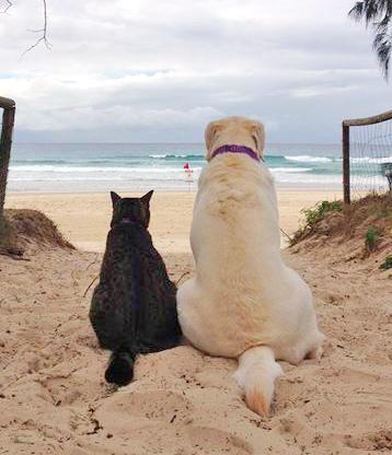 cane-gatto-mare