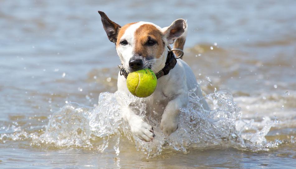 Quali Giochi Con Il Cane Si Possono Fare Allaperto