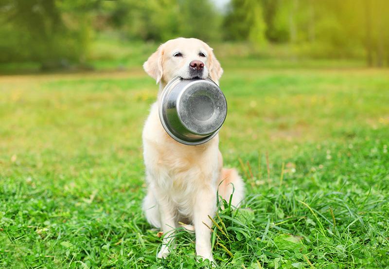 alimentazione-estiva-cane