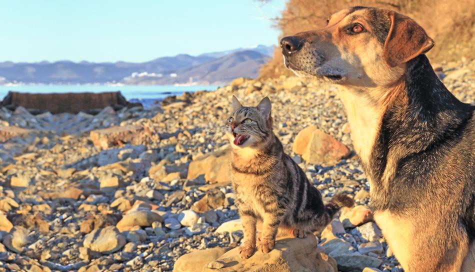 Cani E Gatti In Estate Consigli Per Il Loro Benessere