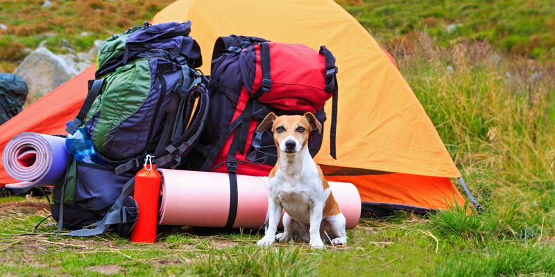 Consigli per una vacanza in montagna con il cane - Cosa portare in vacanza per i bambini ...