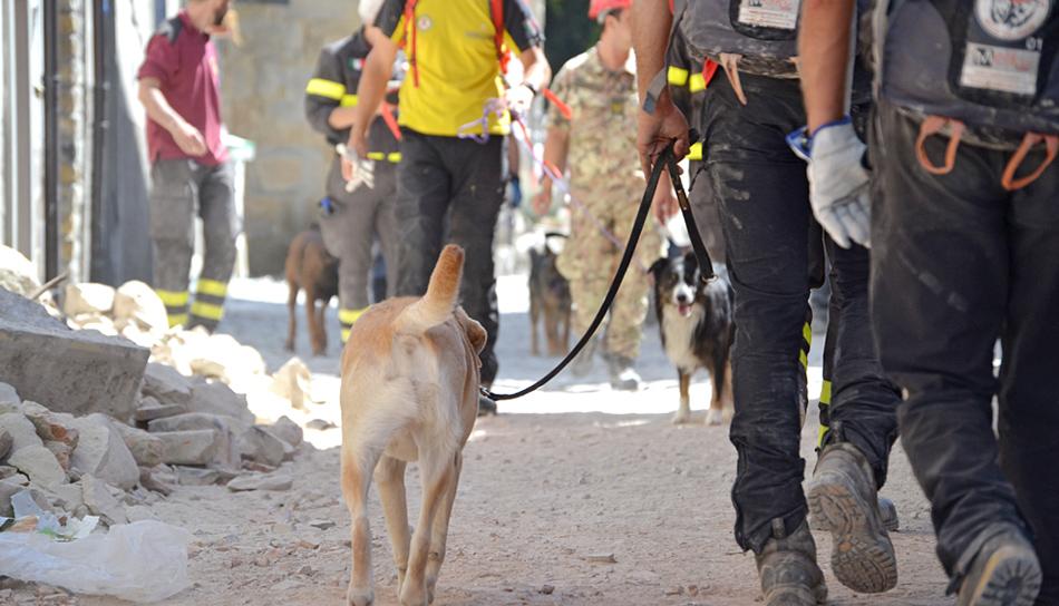 Come Operano I Cani Da Ricerca Dopo Un Terremoto