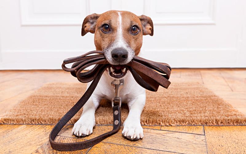 ansia-da-separazione-nel-cane-uscire