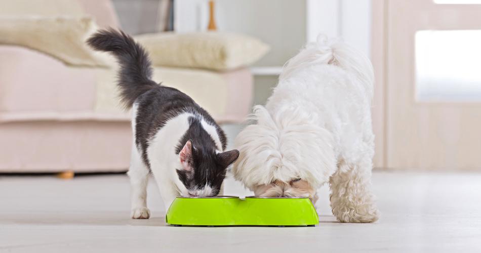Alimentazione Per Cani E Gatti Quello Che Non Sapevi