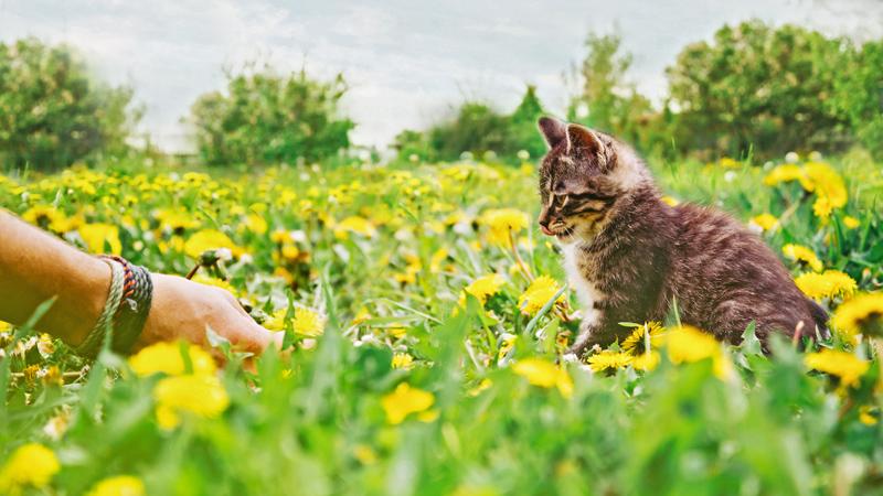gatto-scomparso-avvicinalo-con-il-cibo