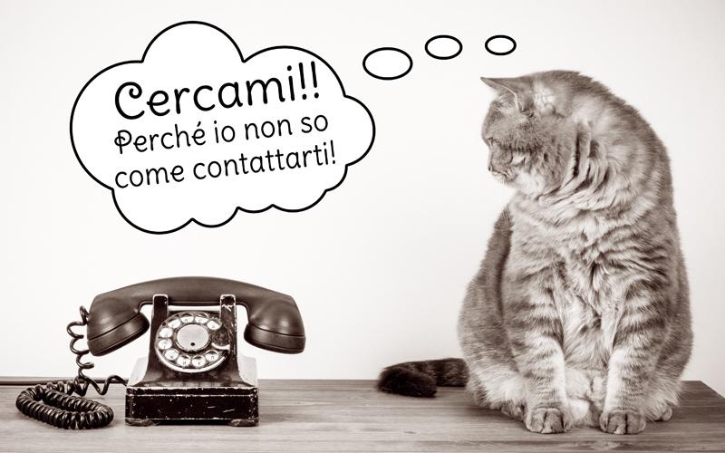 gatto-scomparto-contattami