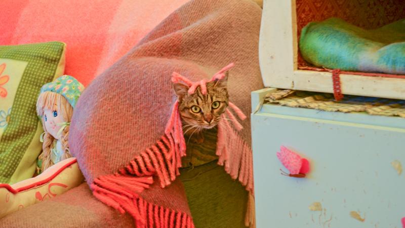 gattino-coperta-miciottoli-lets-help-tour