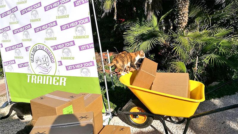 gatti-scatole-stopgo-su-pallosu
