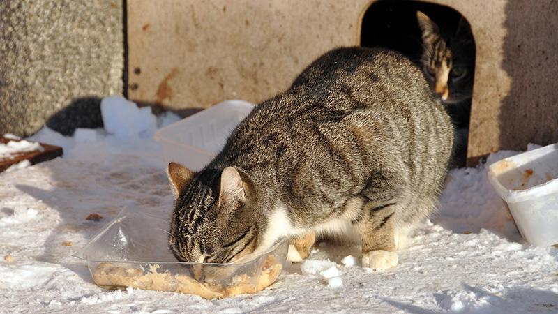 gatto-cibo-neve-aiutare