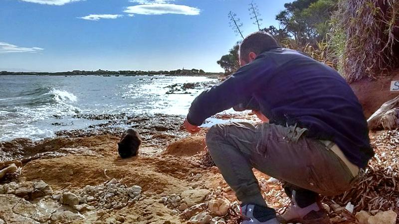 spiaggia-gatto-su-pallosu